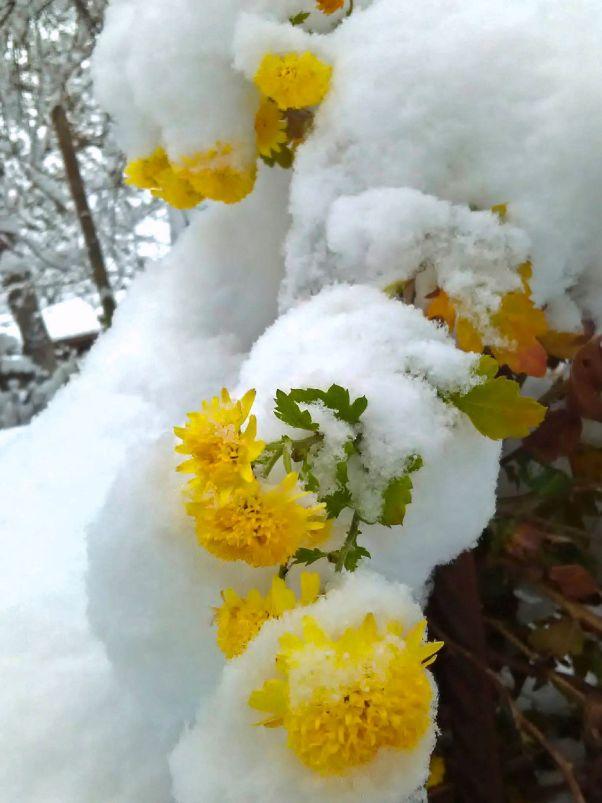 Снежна разходка из Янтра