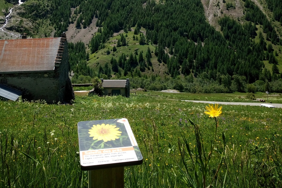 Sentier plantes comestibles Pied du Col