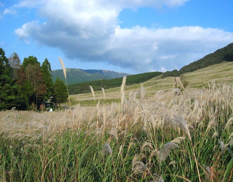 Sengokuhara Pampas Grass Field in Autumn.