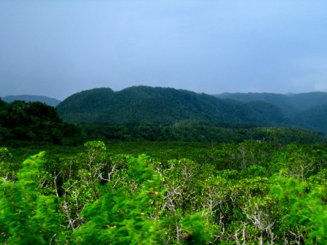 The inland of Iriomote Jima