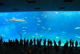 Okinawa Honto Churaumi aquarium