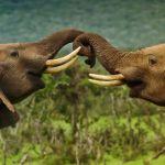 Elephant-Tracking