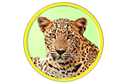 roundedleopard120px