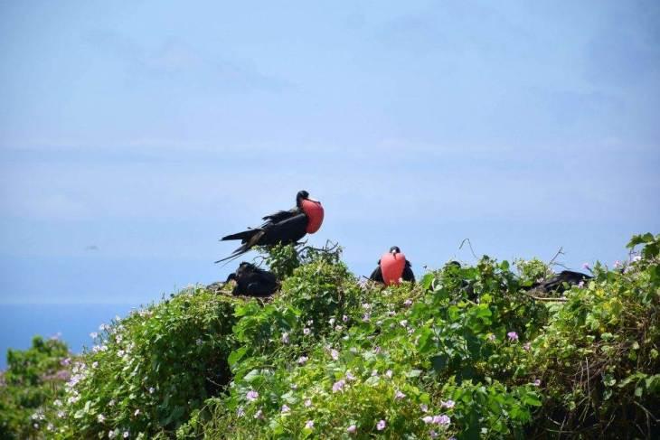 frigit birds on the poor man's galapagos