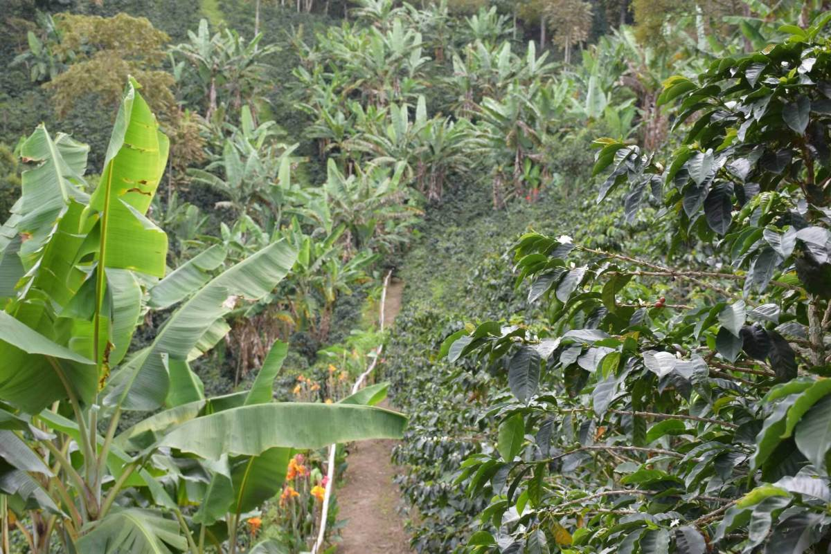 Southern Colombia is known to produce some of the worlds best coffee