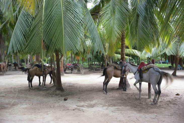 horses are an option on how to get to tayrona national park