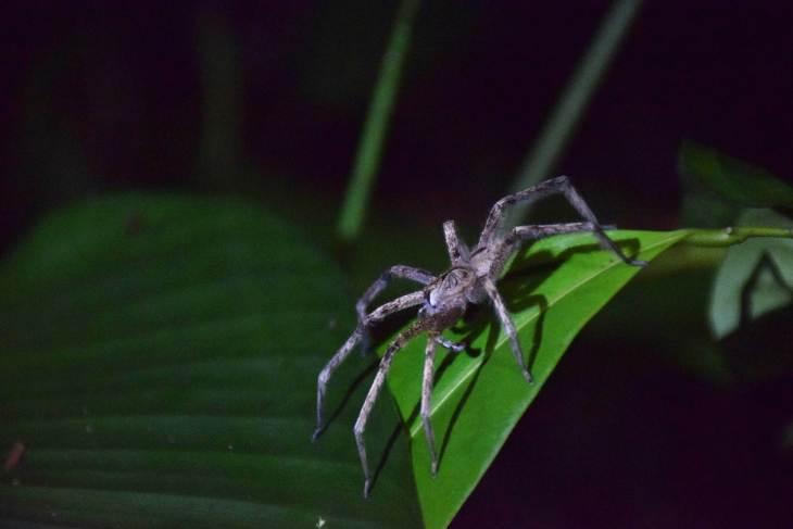 spider amazon peru