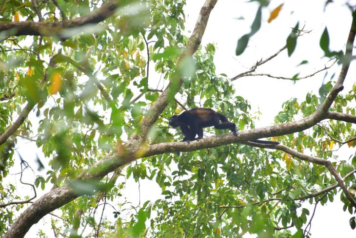cahuita national park wildlife