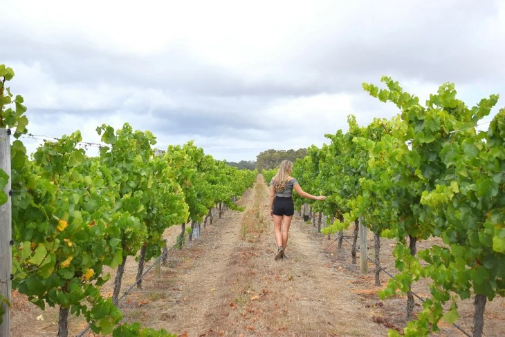 on a wine tour in margaret river