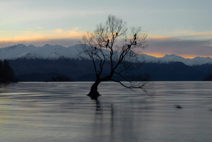sunset photo of that wanaka tree