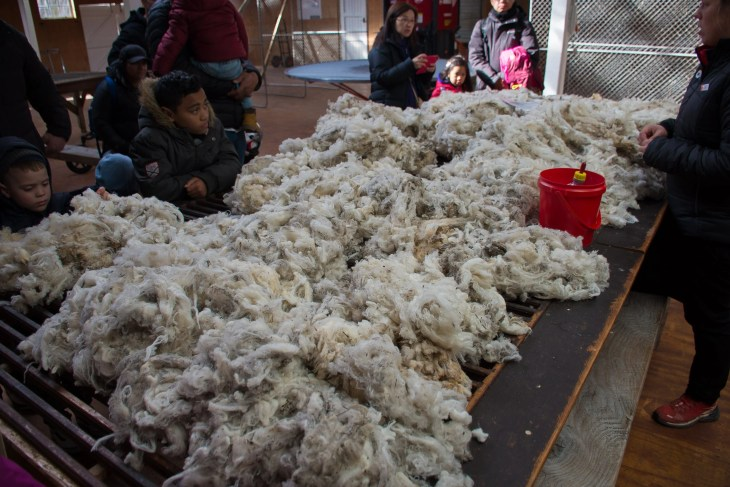 the merino wool produced on the farm