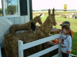 You don't have to be a kid to enjoy the Farm's unique collection of farm animals.