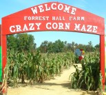 Forest Hall Farm features family friendly activities including its popular corn maze.