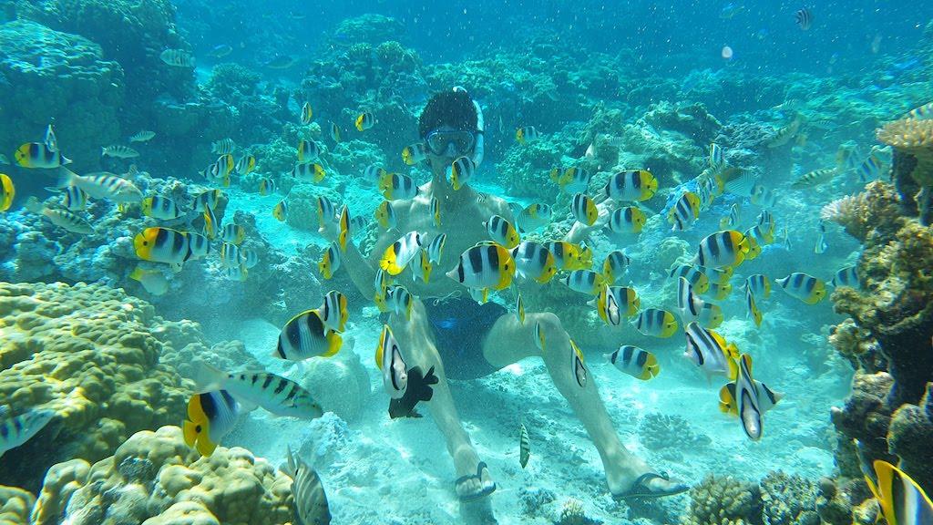 poissons Bora Bora