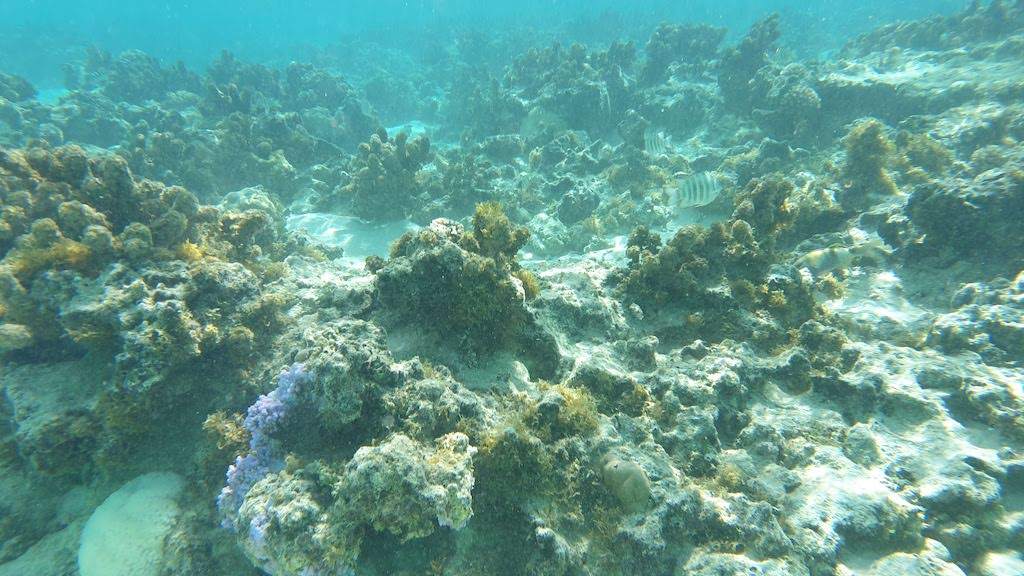 snorkeling plage sofitel Huahine
