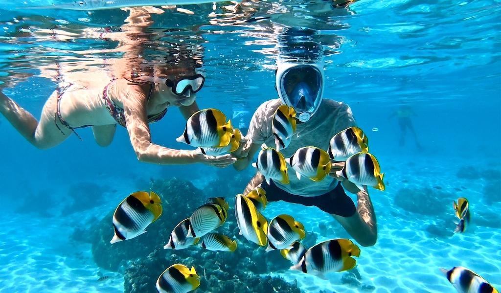 jardin de corail Moorea