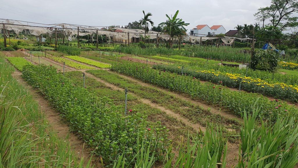 Village écologique : Tra Que