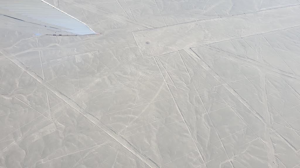 condor Nazca