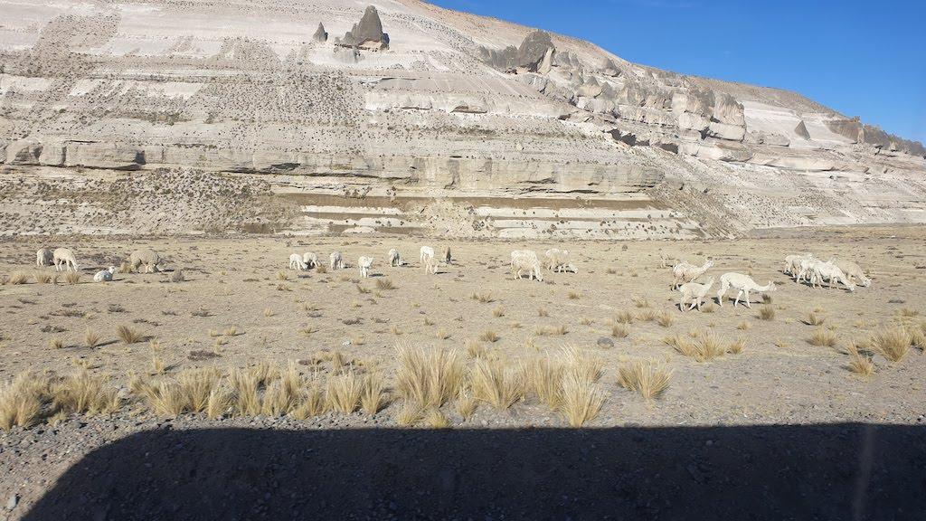 route Cabanaconde Arequipa