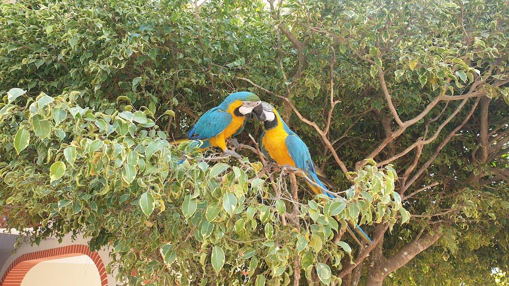 Les perroquets de l'hôtel Takana