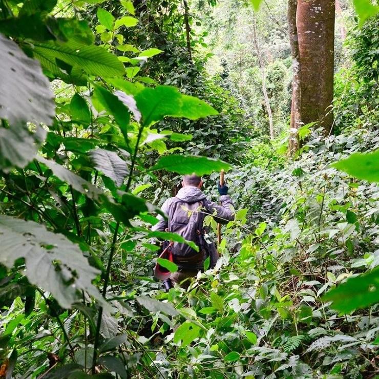 is the gorilla trekking experience worth it? Gorilla Safari in uganda, the Africa safari account.