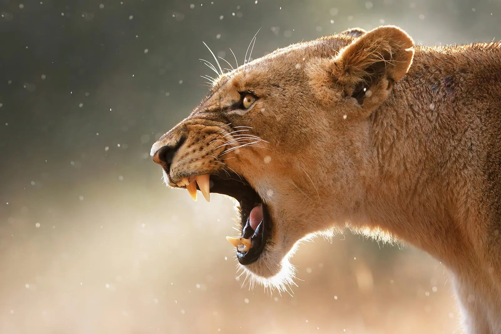 Carnivorous Animals in Uganda