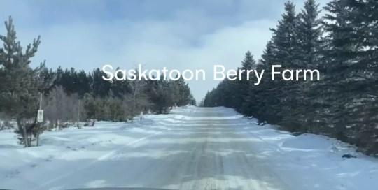 Okotoks – Saskatoon Berry Farm