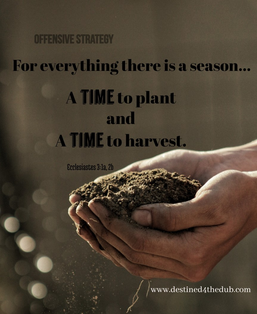 Those Dreams for Your Future? It's Planting Time