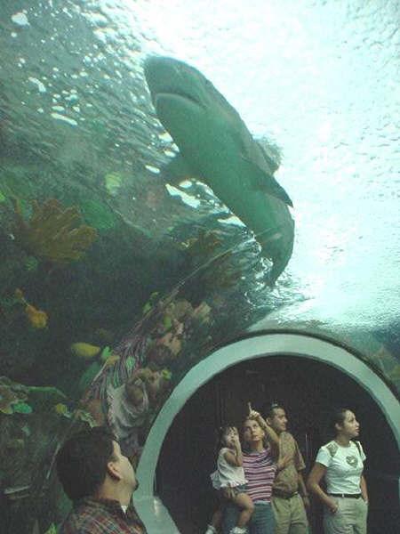 acuarioVER