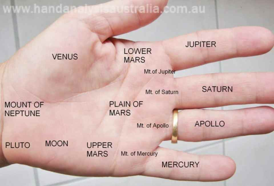 learn palmistry, sari puhakka, destiny palmistry, hand analysis australia, short life line, venus mount, jupiter mount
