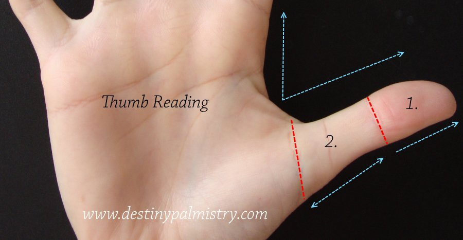 thumb reading, small thumb, large thumb, palmistry thumb