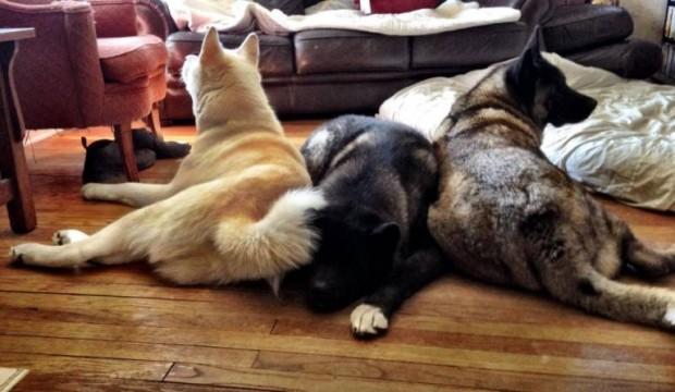 ΗKiaya χαλαρώνει πλάι στα αδέλφια της (Εικόνα: Facebook)