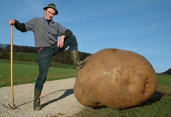 giant-vegetables-2