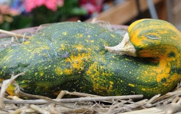 17665-R3L8T8D-650-frutas-verduras-extranas-16