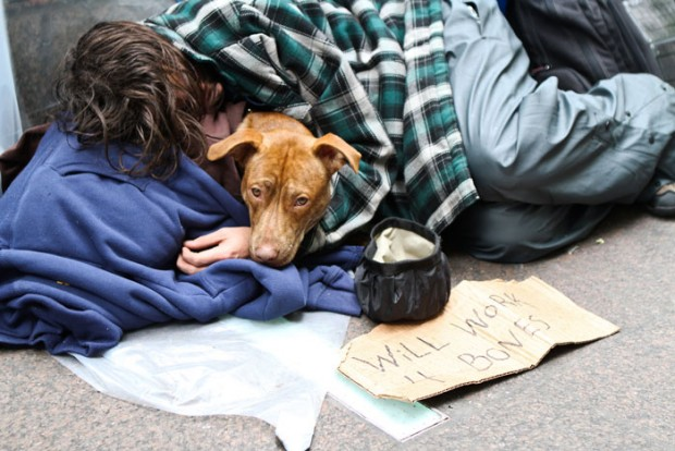 homeless-dogs-unconditional-love-best-friend-110__700