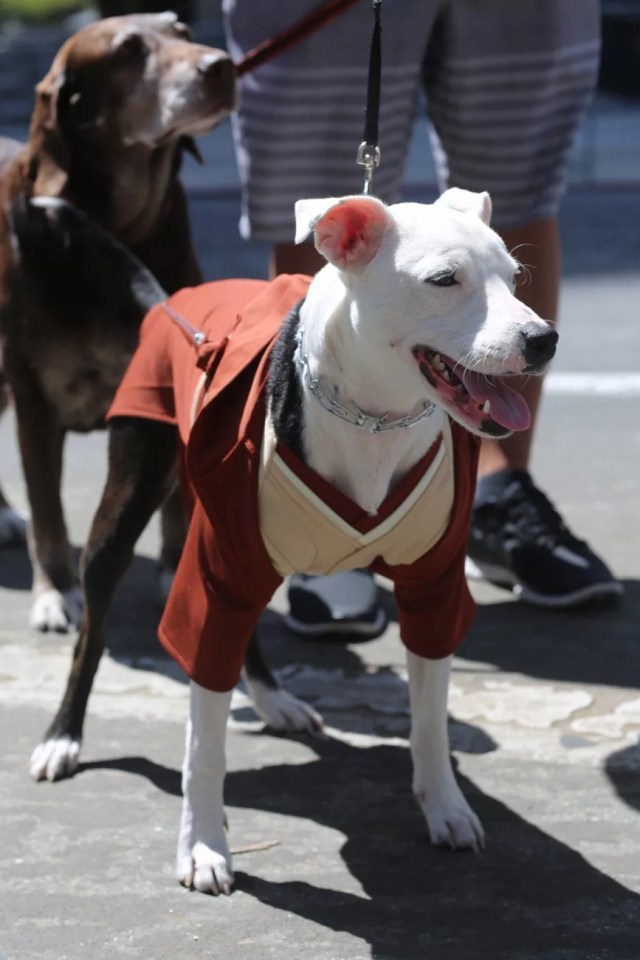 cosplay dog puppy animal cute human gentleman
