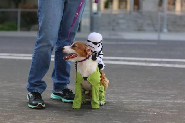 cosplay dog puppy animal cute