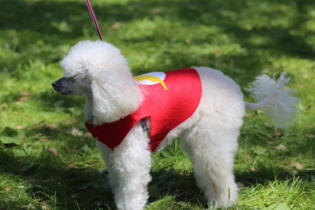 cosplay dog puppy animal cute flash