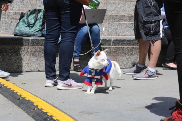 cosplay dog puppy animal cute captain america