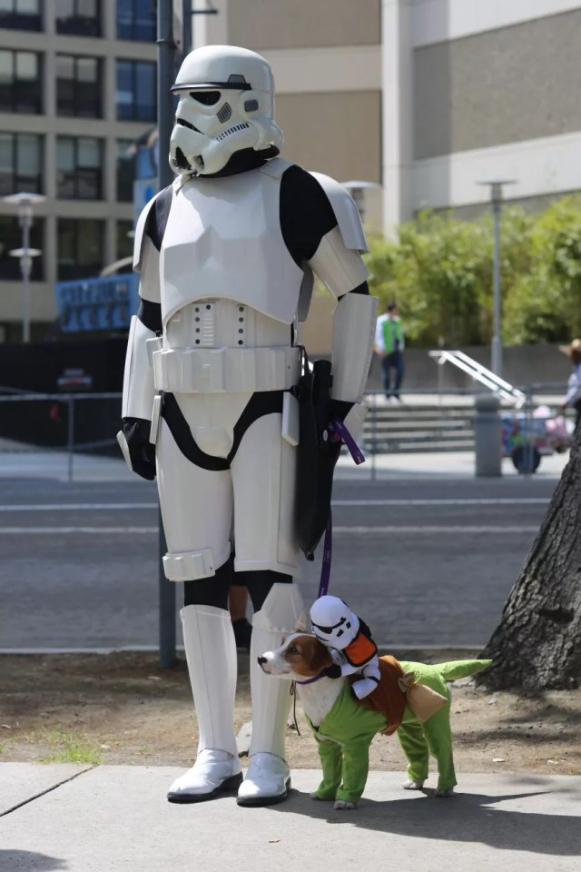 cosplay dog puppy animal cute star wars storm trooper
