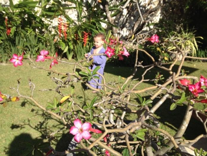 Kyan, fait sa tournée journalière de cueilllette de fleurs