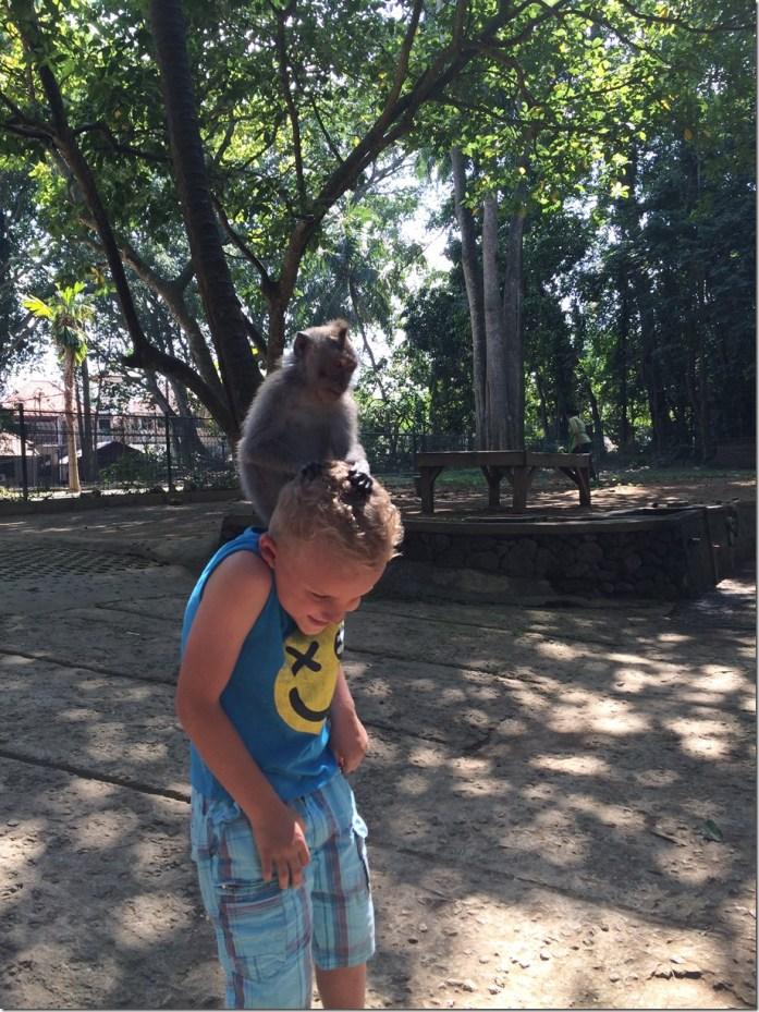 Noah mort de rire de se faire inspecter la tête - Monkey Forest
