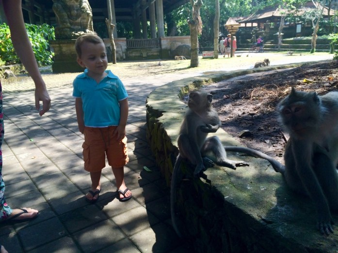Kyan qui regarde les singes à Monkey Forest
