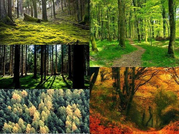 La forêt CE1/CE2