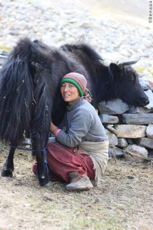Villages et population Zanskari en Himalaya - Coopérative d'éleveurs