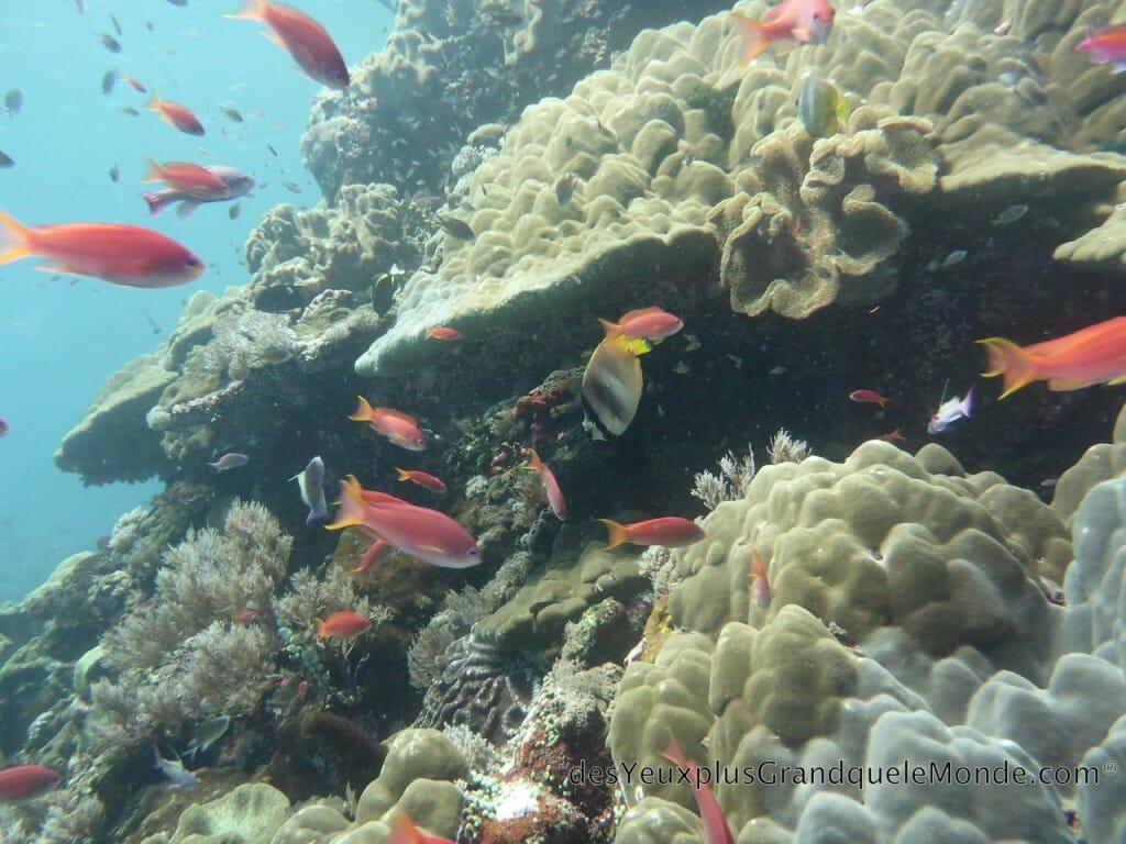 Apprendre la plongée à Bali - Couleurs du monde sous-marin