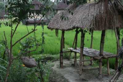 Riziere à côté de Ubud