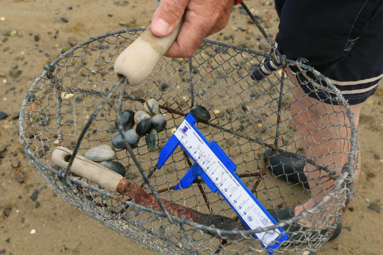Tourisme alternatif - L'equipement du pêcheur à pied