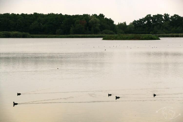 Autour du Lac du Der - Etang du Grand Coulon