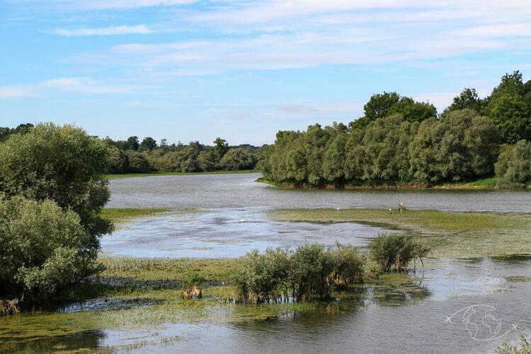 Lac du Der - Entre eau et forêts